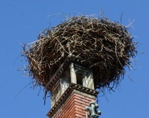 gnijezdo