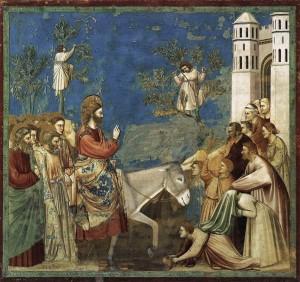 Giotto_Palme