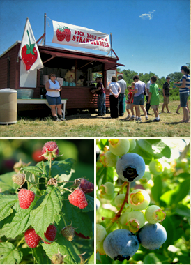 Make a day of it with your bridal party and pick your own fresh strawberries, blueberries, raspberries, peaches, nectarines, pumpkins, and apples!