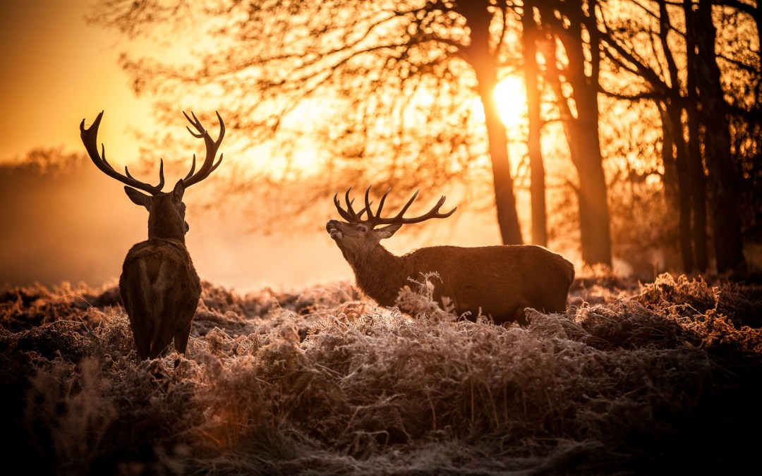 Why Every Man Should Go Hunting