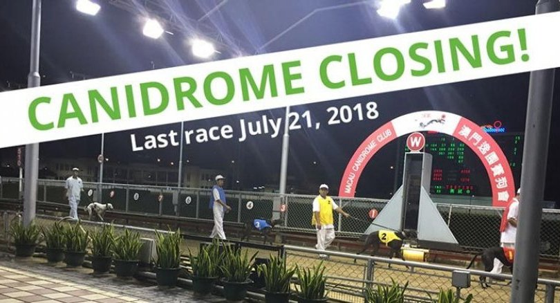 Macau government adopts abandoned greyhounds as track shuts