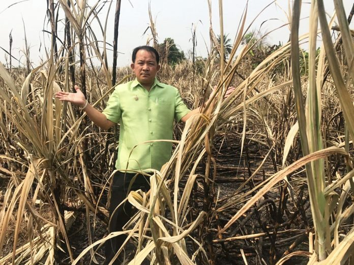 BURNING SUGARCANE STALKS CONTRIBUTES TO SMOG