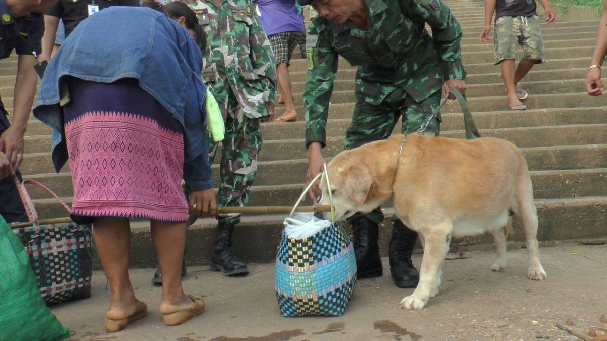 Truck spraying stepped up to prevent swine fever from entering from Laos