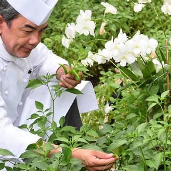 Chef Vichit Mukura picking herbs. Photo: Khao / Facebook
