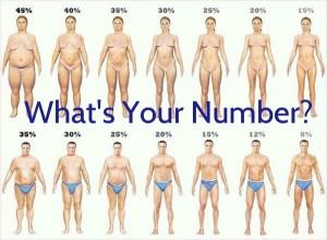body-fat-percentages