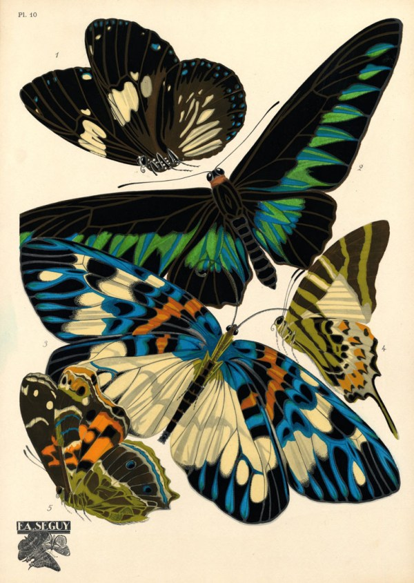 The Other Life of Eugène Séguy, Entomologist - Pattern ...