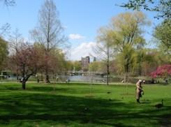 Public Garden view