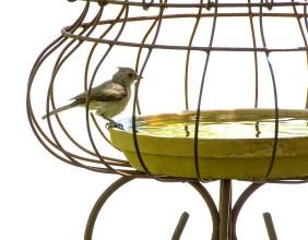 sunday bird at water