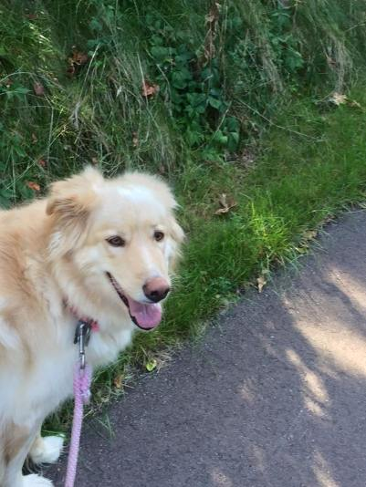 Honey all happy because she is getting her walk in! 17 September 2015