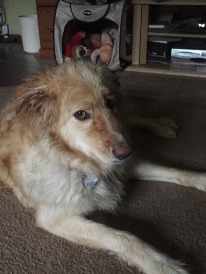 Honey after getting caught in a downpour on 25 June 2015. She was not very happy with MoMma!