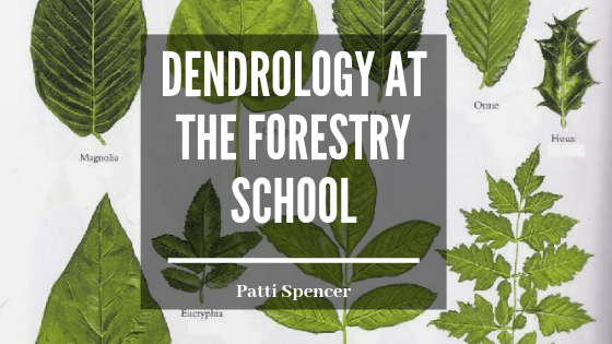 Dendrology_Forestry_Patti_Spencer blog header