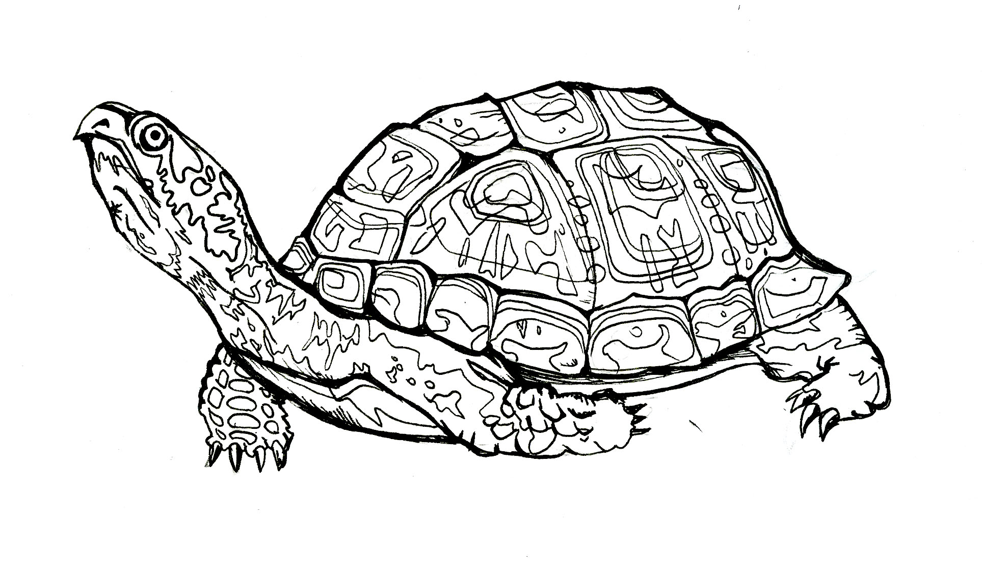 Snapping Turtle Line Drawing