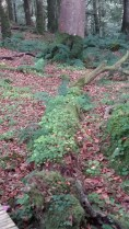 walk thru fairy forest