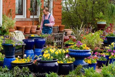 Pots still ahve cool weather plants