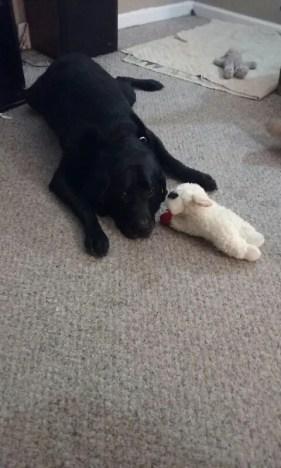 bubba dog with sheep stuffy