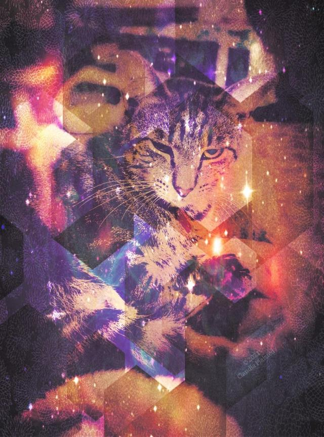 An artistic image of a dark tabby cat, looking sleepily towards the camera. The photo is overlaid with warm colors, geometric shading, and stars, giving it an ethereal vibe.