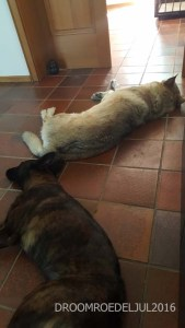 Our lay down besides your friend on the cool tiles in the kitchen…