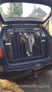 The dogs safe again during car trips…