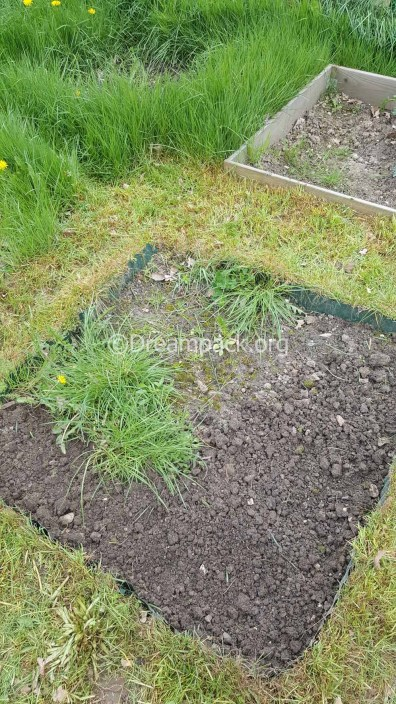 VegetablegardenApr18