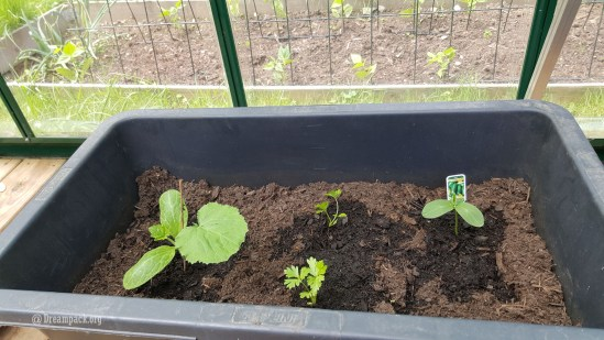 Sowed also Zucchini and cucumber