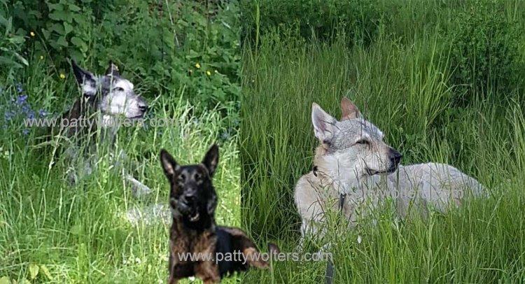 Three furry friends