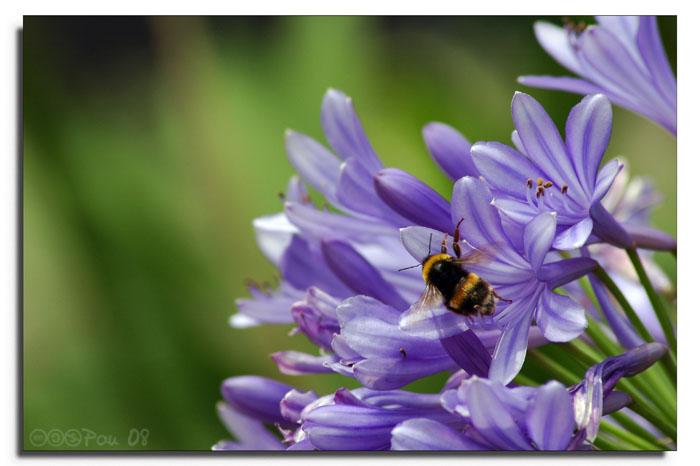 Flores & abejas
