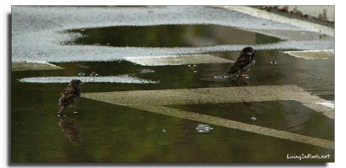 2009-08-12 12.10.06 ocells aigua