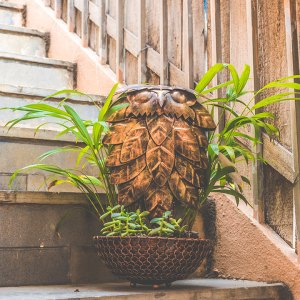 Old is Gold Owl Planter