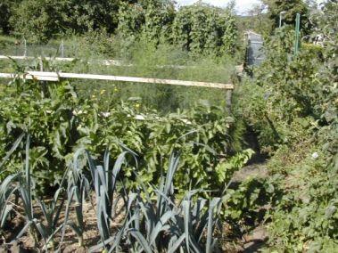 Blich in den Biogarten