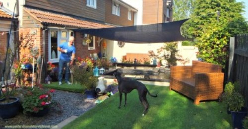 house sitting with Lip and Shadow in Cardiff Wales #housesitting #house #sitting #pet #dog #dogs #look #after #care #bay #city #welsh #atlantic #wharf #canal