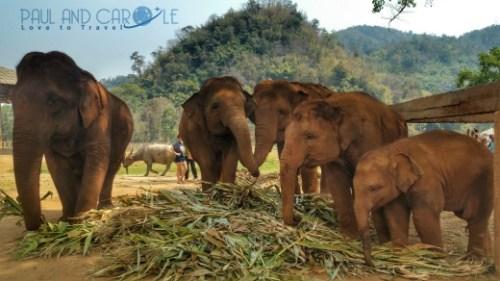 elephant exploatation