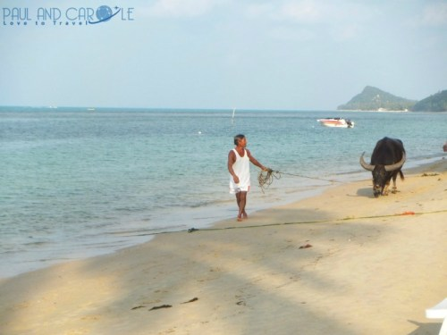 Guide to the best beautiful beaches of Koh Samui Thailand by Paul and Carole buffalo watching Bang Por beach