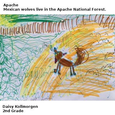 Apache_DaisyK