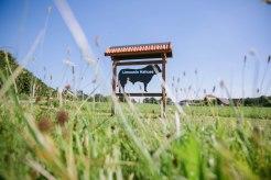 Das Rindfleisch bezieht Josef Willenbrink vom Bauern Hahues