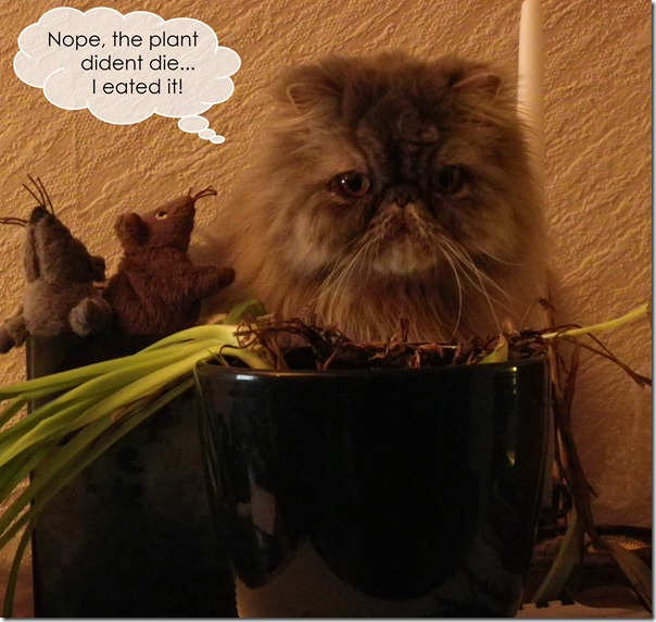 eated_plant