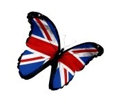14491017-english-flag-butterfly-flying-isolated-on-white-background