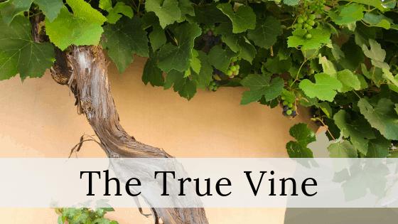 The true vine title graphic
