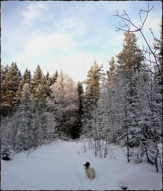 vinterskrud11