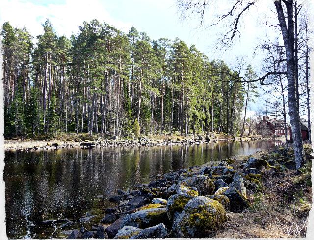 Finbesok Skogen