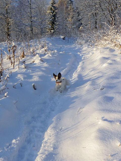 vintern2009