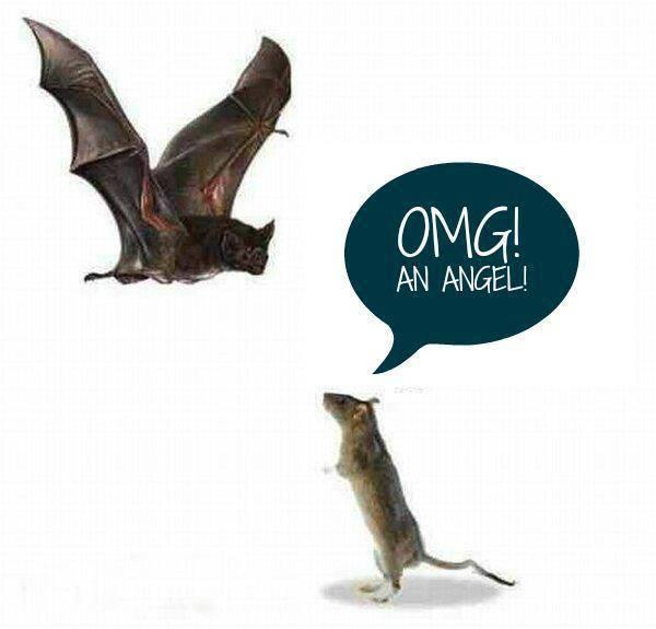 angeleller
