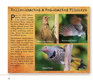 woodpeckers page 75