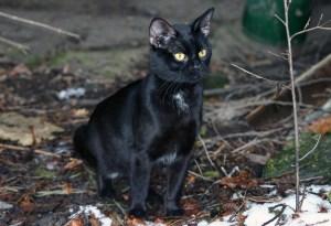 cat-1233058_1280