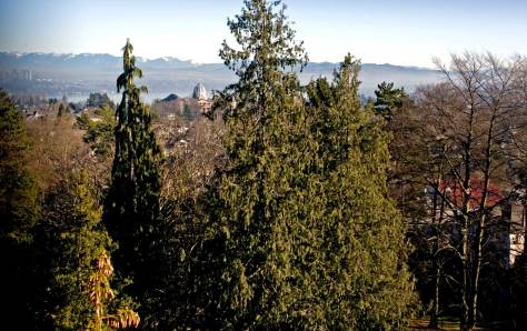 NOW: In the century since Oakes looked east toward Lake Washington most of the elaborate neighborhood pattern of rooftops has been hidden behind the park's landscape.