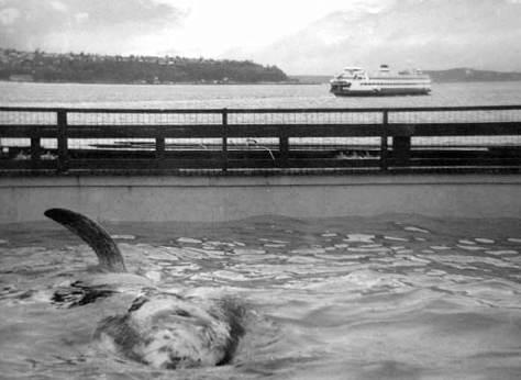 namu-and-ferry-web