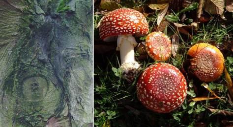 Two examples of inspiring Green Lake morphology