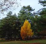 8-orange-yellow-pointed-treew