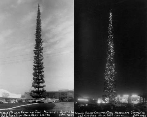 "The ""Tallest Christmas Tree"" in the world needed a parking lot to parody the mere trees we put up in our mere living rooms.  Both shots - consecutive by their numbers - were photography by the prolific Ellis out of Arlington."