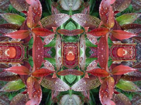 Mandala-No.1-Rain-on-Neighbor's-Leaves-ca.-2009-WEB