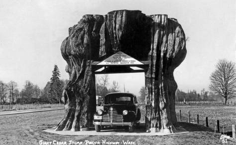 THEN: Variously named the Giant Cedar Stump, the Big Arlington Stump, or just The Stump, this Snohomish Country roadside attraction was killed by a fire in 1893, reduced to stump size and tunneled in 1916, given a concrete base in 1922, and moved alongside the new Highway 99 in 1939, where it is shown here in 1940, long before its last move in 1971. (Courtesy Old Seattle Paperworks)